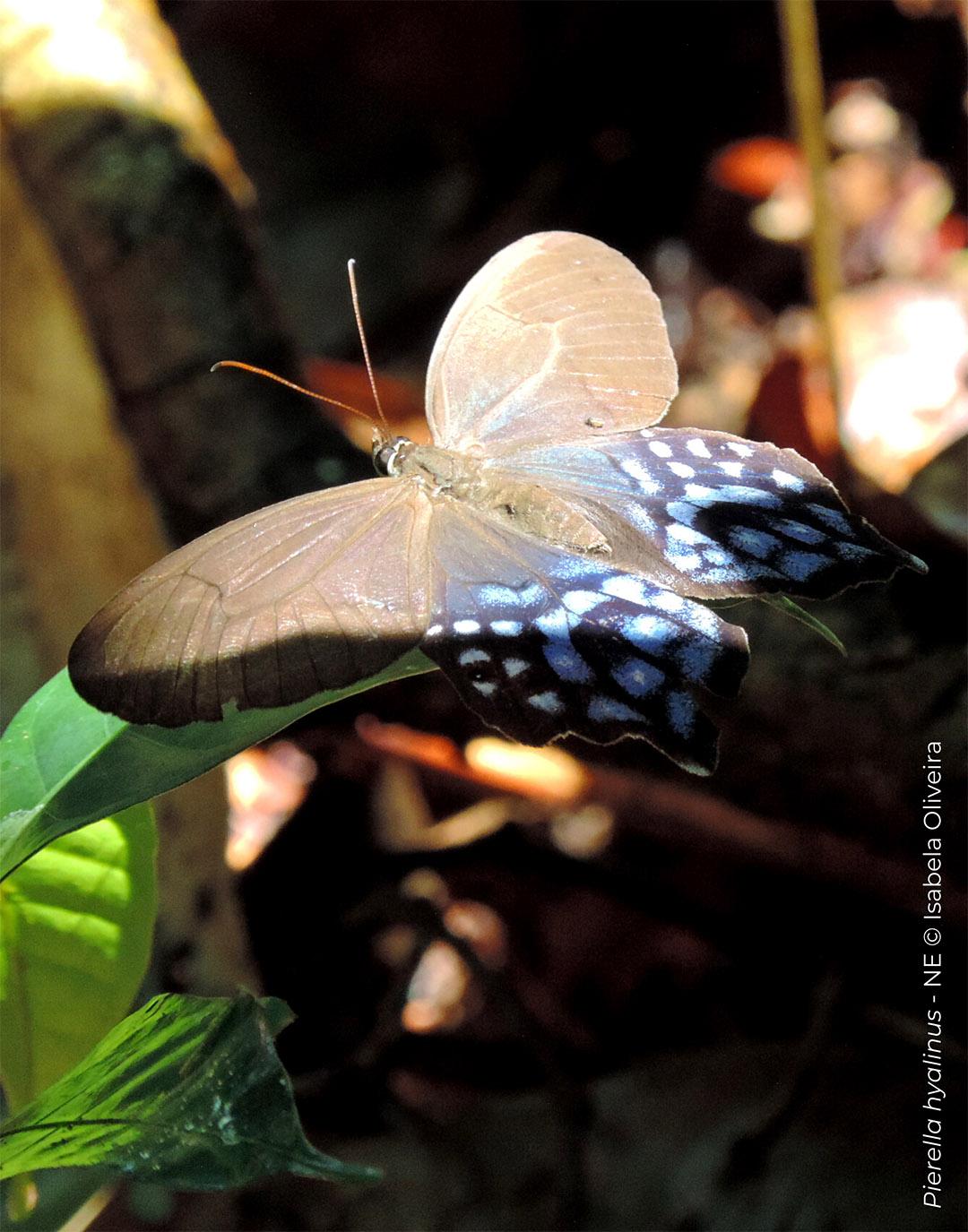 IUCN 3